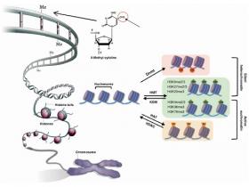 DNA甲基转移酶(DNMTs)活性/抑制分析试剂盒