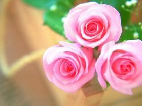 《Nature》:让你的玫瑰种的随心所欲