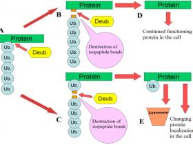 去泛素化酶和泛素样异肽酶抑制剂:PR-619