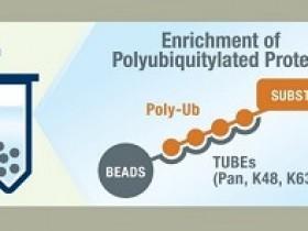 """来自""""TUBEs""""的黑科技,泛素化蛋白富集纯化神器"""