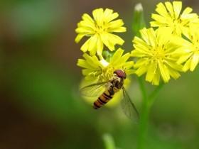 果蝇RNA提取分离方法解析