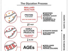 晚期糖基化终末产物(AGEs)定量试剂盒