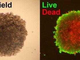 活/死细胞双染色试剂盒,品质与性价比齐飞