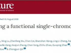 Nature突破:中国学者创建全球首例人造单染色体真核细胞