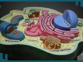 细胞核蛋白&胞浆蛋白提取试剂盒,无交叉污染!