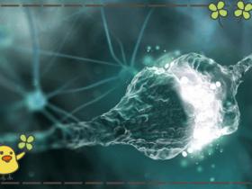 退化神经元染色试剂盒-Fluoro-Jade C (FJC)(绿色荧光)