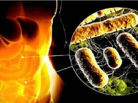 粪便移植在临床治疗中的应用