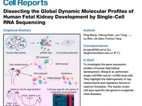 您想要研究单细胞RNA,我们提供单细胞RNA提取试剂盒