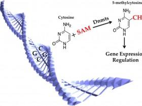 满足您对5-mc(5甲基胞嘧啶)抗体的一切幻想 ---Cell & Nature文章认证