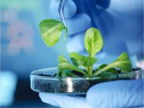 植物蛋白提取方案:PEB蛋白提取缓冲液