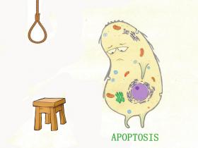 细胞凋亡(Apoptosis):TUNEL法细胞凋亡检测试剂盒