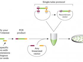 双酶切和同源重组法构建载体