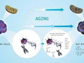 β-半乳糖苷酶检测方案:细胞衰老(Senescence)检测试剂盒