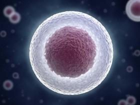 完整细胞核提取方案:细胞核分离提取试剂盒(高纯度)