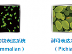 关于重组蛋白,你真的了解它吗?