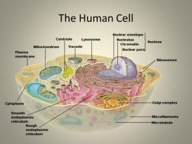 细胞总蛋白提取试剂盒,高效稳定!