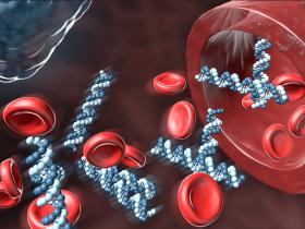 血液DNA提取方案:血液DNA提取试剂盒