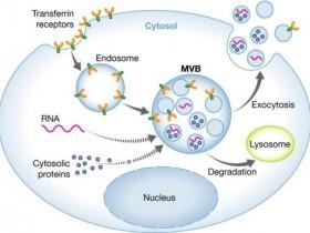 外泌体RNA分离方案:外泌体RNA提取试剂盒