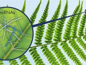 植物microRNA纯化方案:植物microRNA提纯试剂盒
