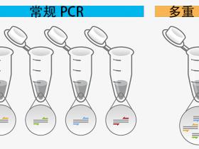 分子诊断研发不用愁,看看一步法多重PCR试剂盒-(基于探针)!