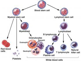 白细胞RNA分离方案:白细胞RNA提取纯化试剂盒