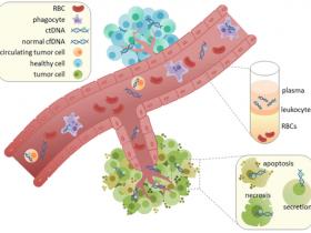 血浆/血清cf-DNA分离方案:血浆/血清游离DNA提取试剂盒