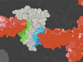 1370+验证的抗体对(Antibody Pair),让ELISA开发变Easy!