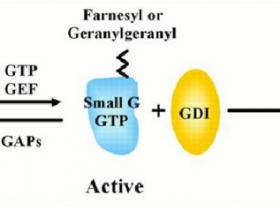 G-LISA法:高效快捷的小G蛋白活化检测方案