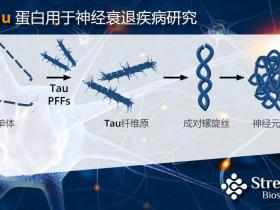 全新活性Tau蛋白-阿尔兹海默症(AD)动物模型新助力