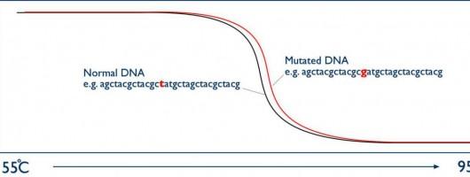 高分辨率熔解曲线(HRM)分析预混Mix(PCR),用于基因筛查?