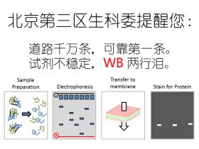 北京第三区生科委提醒您:WB道路千万条,Abbkine产品都说好~