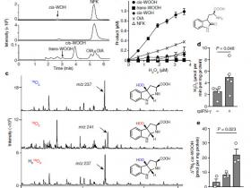 生物评论周报第66期:Nature:揭示RNA m6A修饰调控抗肿瘤免疫机制