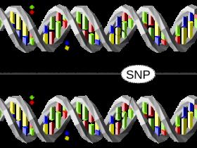 飞行时间质谱(MALDI-TOF)法SNP分析(PCR),就选TERMIPol-DNA聚合酶