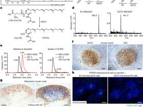 生物评论周报70期:重大发现:人B细胞限制受体P2RY8的配体被发现