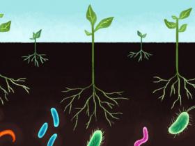 土壤总RNA分离方案:土壤总RNA提取纯化试剂盒