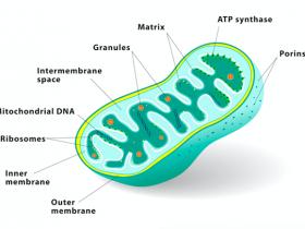 TraKine™ Pro线粒体(Mitochondrion)活细胞荧光探针-没错,我就是要超越MitoTracker®!