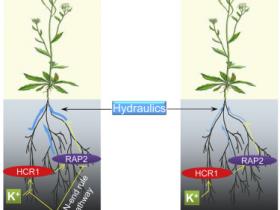 植物环境压力研究中的低氧胁迫相关抗体