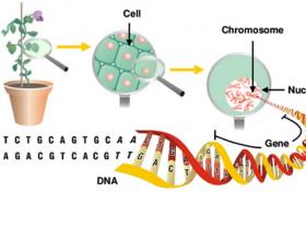 纯化高质量植物DNA,您缺一个植物DNA提纯试剂盒
