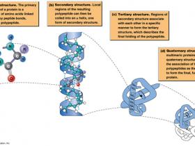 【专题】蛋白质样品制备:细菌,酵母,植物...等