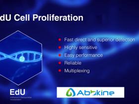 超越BrdU,新一代细胞增殖成像分析试剂盒(EdU法)