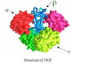 神经营养因子专题2-神经生长因子(NGF)