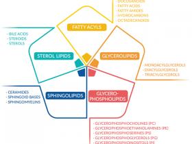 """脂质研究""""助手""""系列一:脂肪酰基产品"""