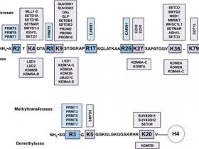 蛋白甲基转移酶和去甲基化酶抑制剂的研究
