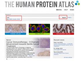 拯救你的发际线:人蛋白质数据库(HPA)