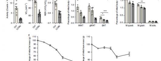 文献解读|慢性病毒感染期间,CD8+T细胞可诱导恶病质