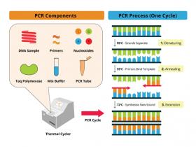 PCR技术攻略了解一下