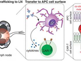 生物评论周报第90期:Science:肿瘤疫苗与CAR-T疗法的完美结合,可完全清除60%小鼠体内的实体瘤