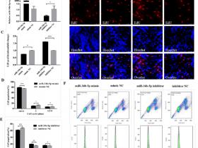 MiR-34b-5p通过靶向IGFBP2介导成肌细胞的增殖和分化