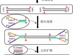 二代测序DNA文库,Epigentek是您的首选