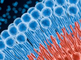 您不曾了解系列4:活细胞的脂类染色